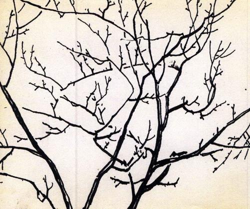 冬天的树枝